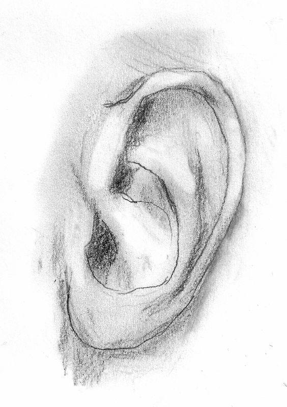 Bleistiftzeichnung eines Ohrs